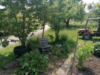 man sieht den Kräutergarten und im Hintergrund Bäume und einen kleinen Traktor.