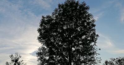 Man sieht einen Baum in der Abendsonne.