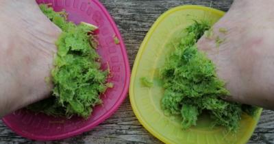 Man sieht zwei Teller (pink und gelb) mit Sellerietrester. Die Fersen stecken im Trester. Das ist ein super Hausmittel bei rissigen Fersen.