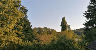 Man sieht den Blick vom Balkon auf die Bäume im Tobel. Die Abendsonne scheint auf die Bäume.