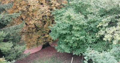Man sieht drei Bäume in einem Abhang. Ein Teil einer Tanne, eine Rosskastanie, die schon viele braune Blätter hat und einen grünen Haselstrauch.